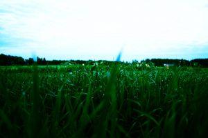 water drops grass plants sky landscape