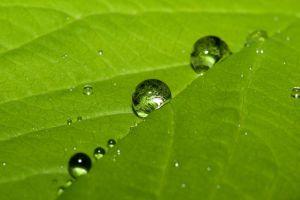 water drops macro leaves plants