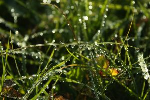 water drops nature plants macro