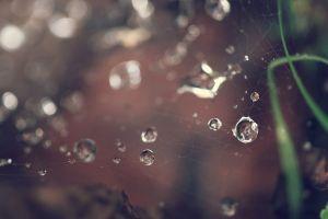 water drops nature spiderwebs macro