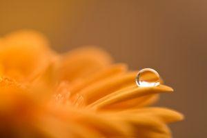 water drops plants macro flowers