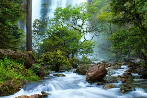 water nature landscape trees