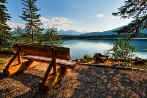 water trees lake nature bench landscape