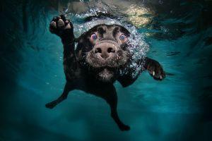 water underwater dog good boy swimming black animals swimming pool nature bubbles legs muzzles