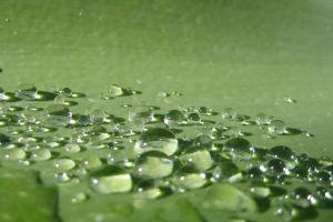 water water drops green macro macro
