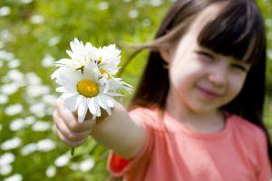 white flowers children flowers daisies