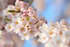 white flowers macro nature flowers