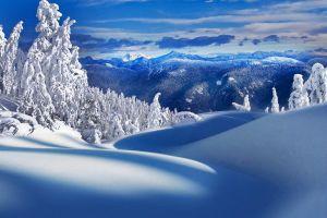 winter mountains snow pine trees