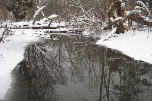winter snow reflection nature trees