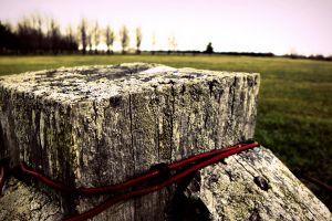 wood field depth of field