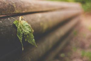 wood nature leaves macro blurred closeup