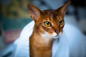 yellow eyes feline blurred cats animals
