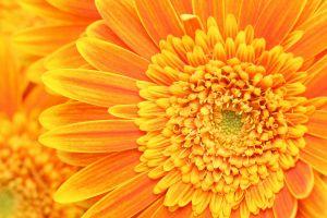 yellow flowers macro flowers