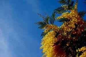 yellow flowers sky flowers