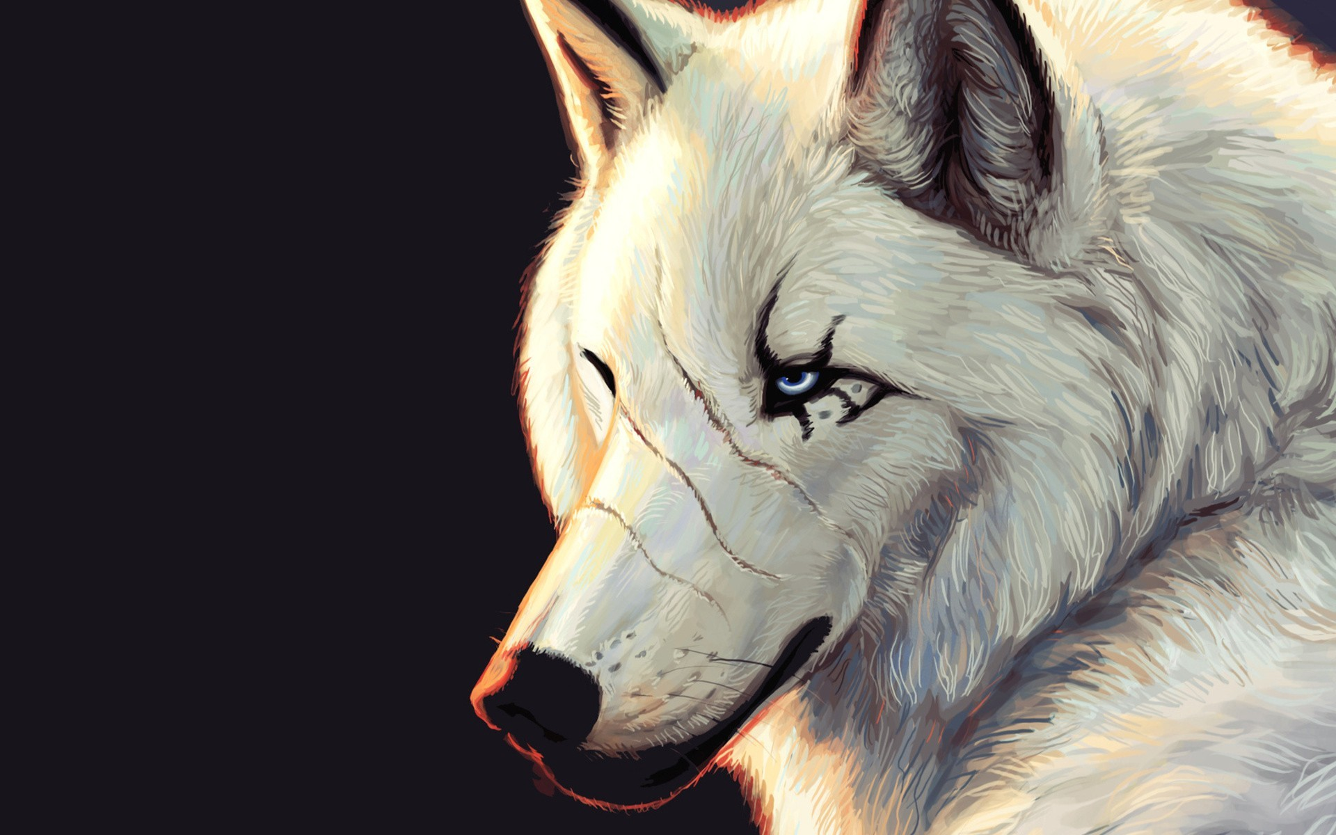 wolf digital art artwork animals