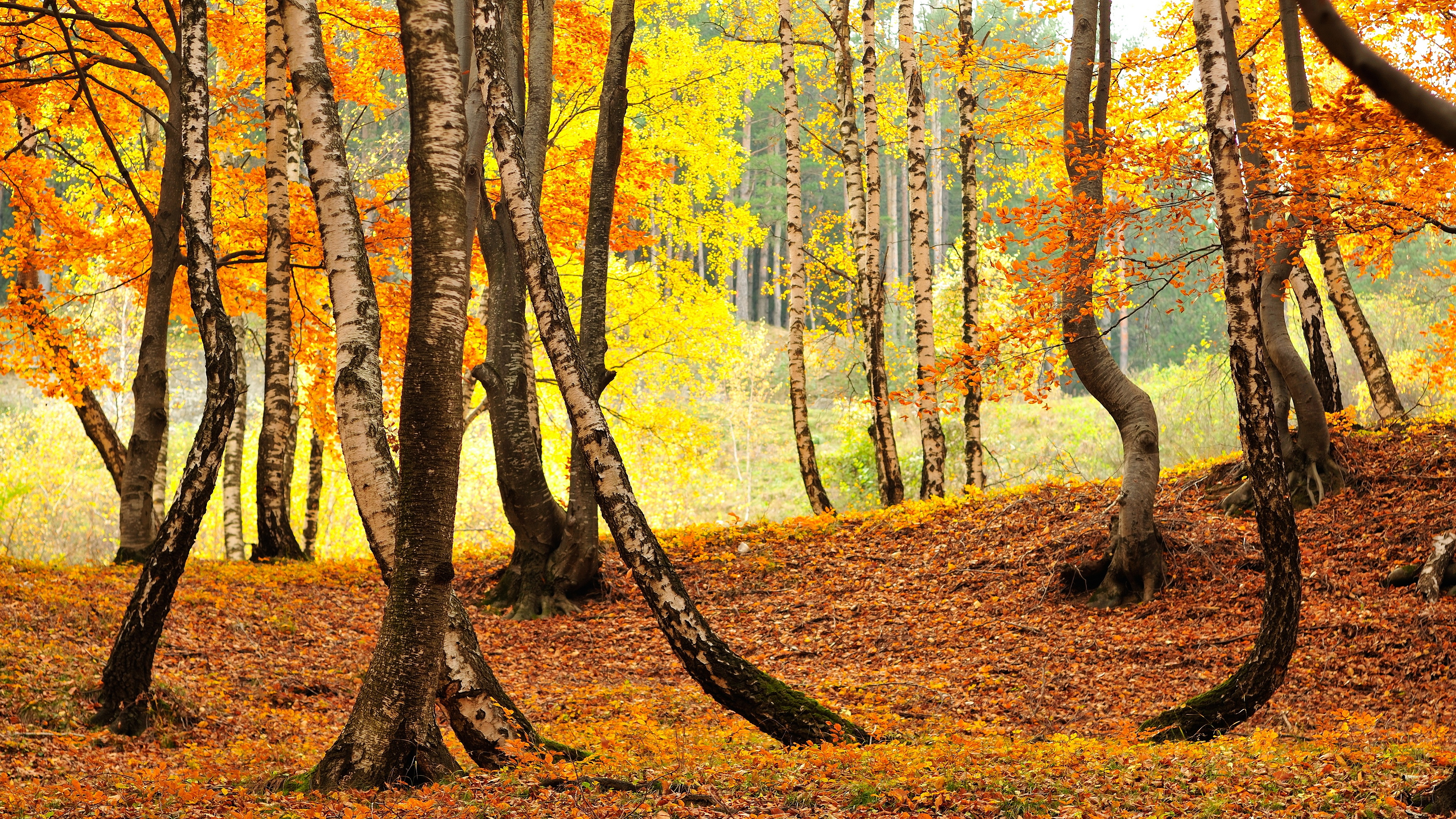 fall nature trees leaves