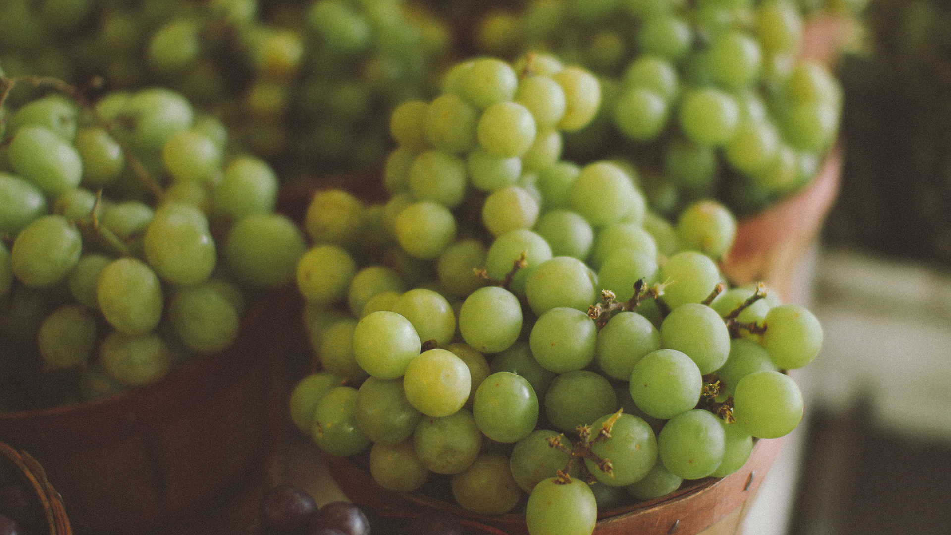 grapes photography fruit food