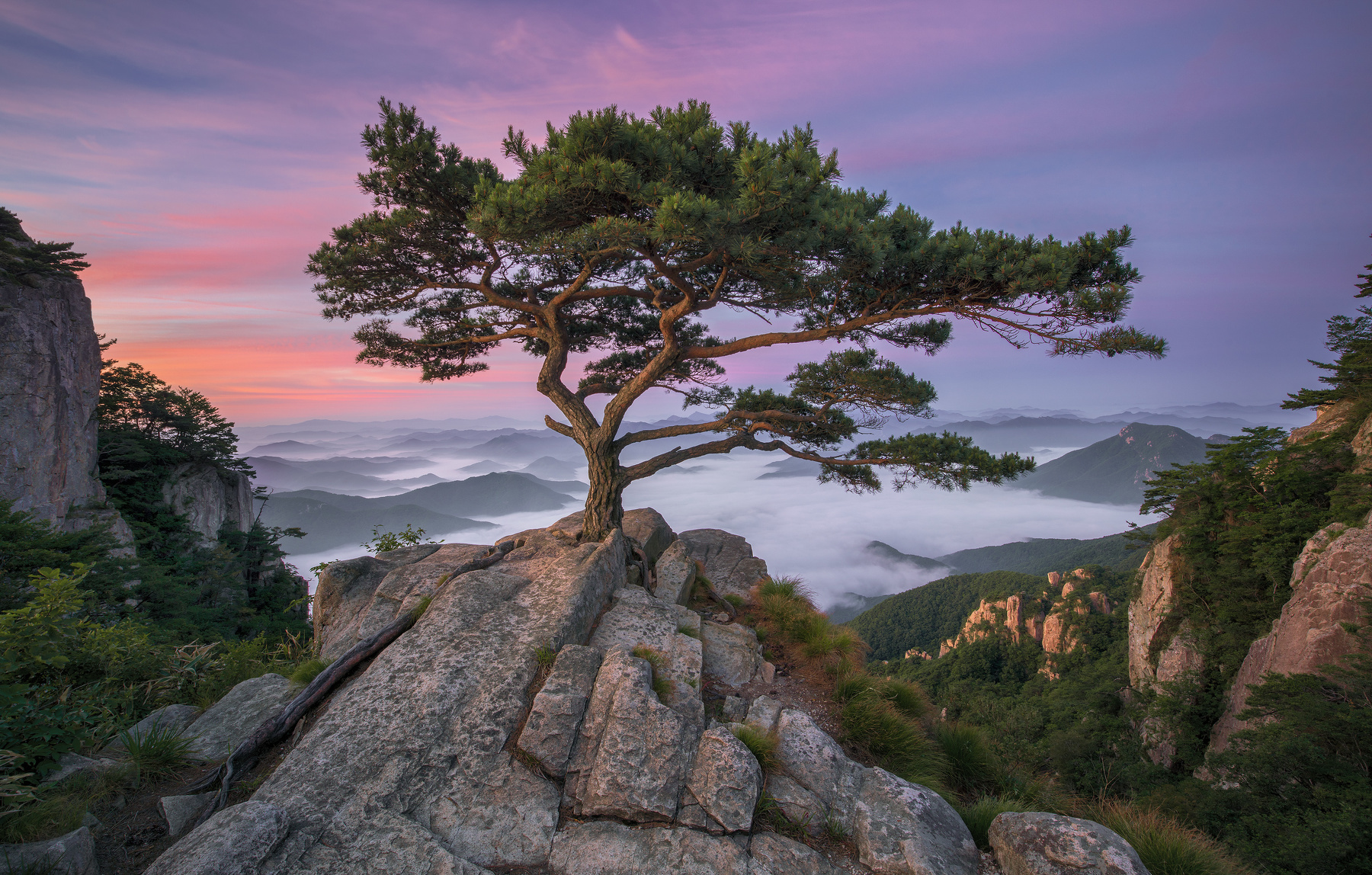 landscape trees sky pine trees mountains