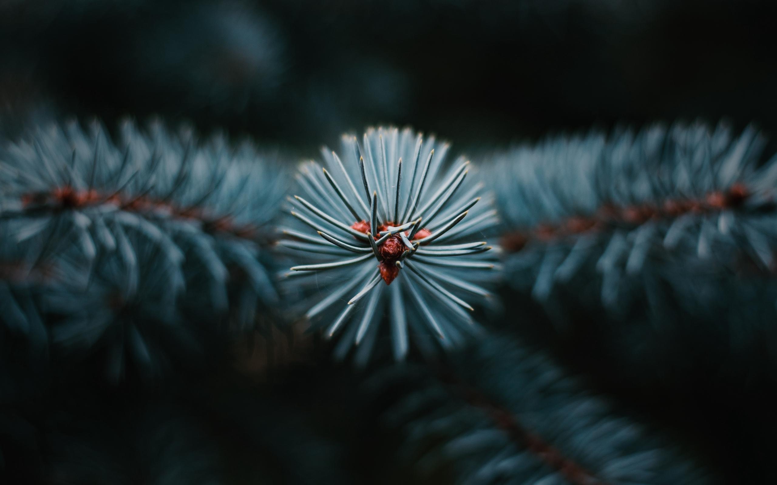 pine trees trees branch needles nature