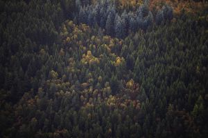 aerial view forest pine trees trees landscape nature