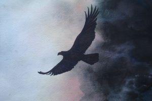 animals artwork dark flying eagle