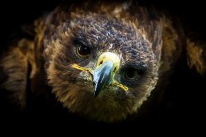 animals birds dark