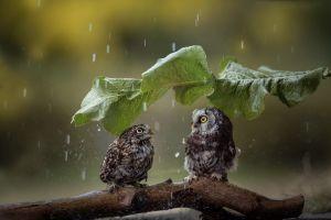 animals birds leaves rain