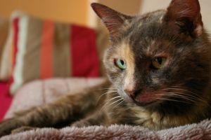 animals cats indoors
