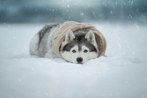 animals dog winter cold snow good boy
