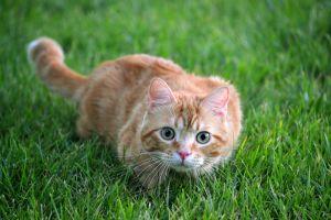 animals grass outdoors cats
