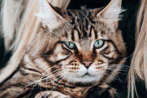 animals green eyes cats cat eyes feline