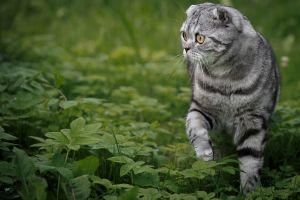 animals plants cats