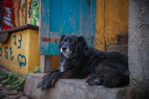 animals urban street urban urban dog