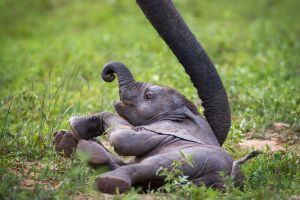 baby animals elephant animals