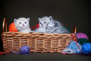 baskets baby animals cats animals kittens