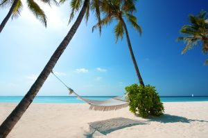 beach outdoors sky hammocks palm trees