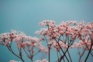 blurred flowers plants simple background