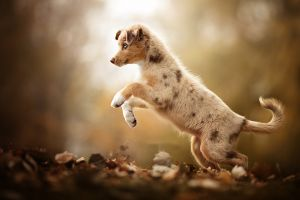 blurred leaves dog fall animals