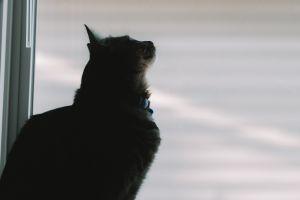 by the window window photography animals cats animal ears