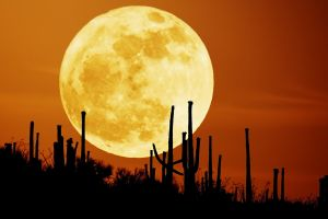 cactus sunset red moon desert