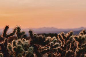california cactus desert wilderness