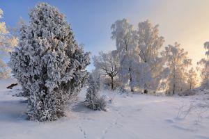 calm sky snow winter trees nature