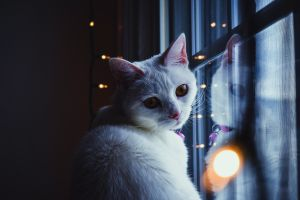 cats room lights reflection animals window