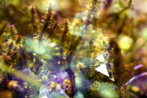 closeup overlay crystal  colorful moss nature macro