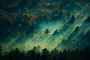 dappled sunlight photography nature forest trees plants fall sunlight mist