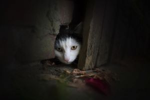dark animals cats