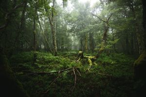 deep forest roots green moss mist foliage nature trees forest