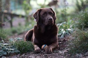 depth of field animals dog