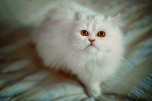 depth of field cats animals