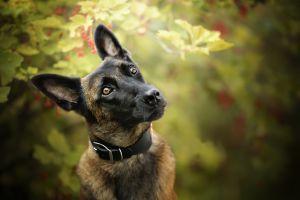 depth of field dog animals